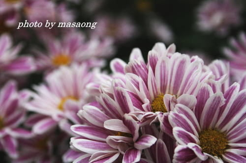 image.88.jpg