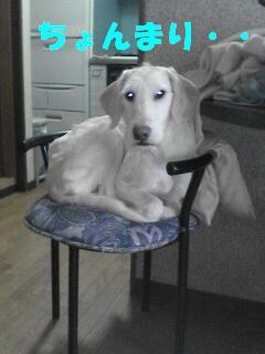 椅子の上のけんセ