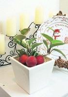 浜田さんの自宅玄関にある観葉植物には、小さなリンゴを添えて冬らしい雰囲気を演出