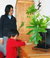 高島さんは床だけでなく、棚の上にも観葉植物(セローム)を置いている(東京都内で)=鈴木毅彦撮影