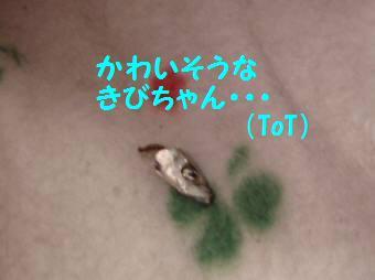 20070428230539.jpg