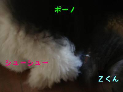 20071122134006.jpg