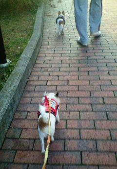 20071209朝散歩