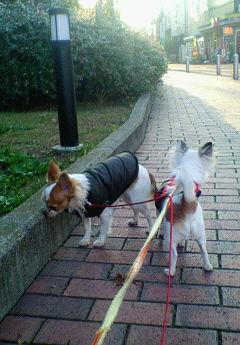 20071215朝散歩