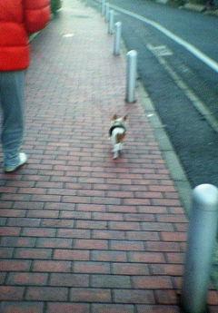 20071215朝散歩1