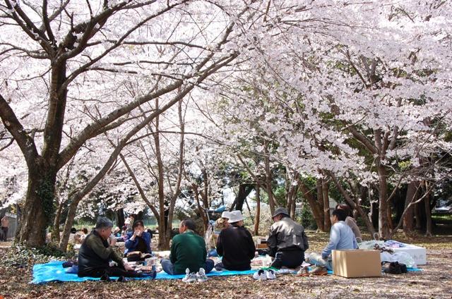 お花見20113