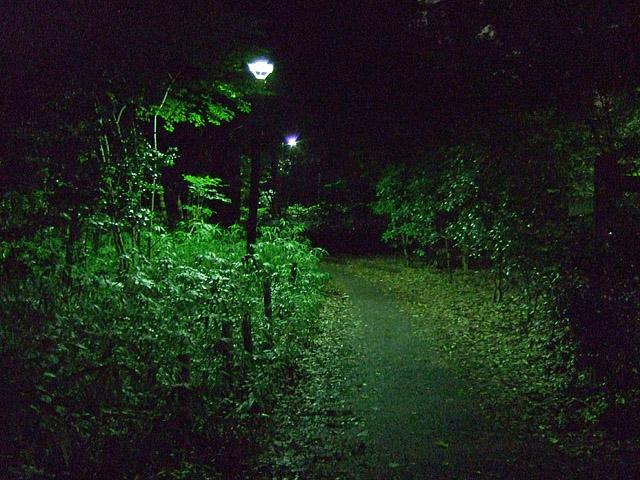 林試の森 070731 02