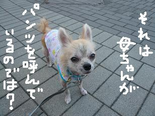 P1060899-deji.jpg