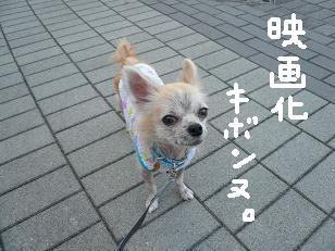 P1060902-deji.jpg
