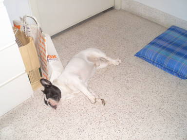 ポカラ寝姿3
