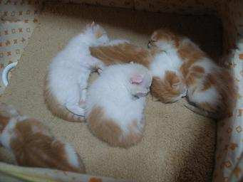 枕代わり?
