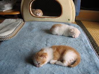 寝る場所は違うの・・・