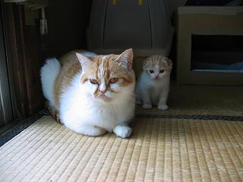 ママと一緒♪