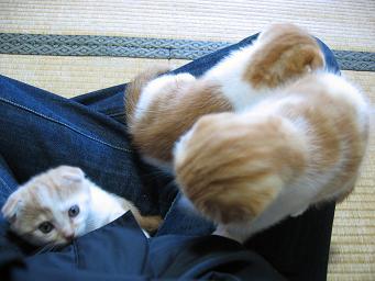乳母の上でくつろぐの♪