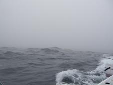 一寸先は霧