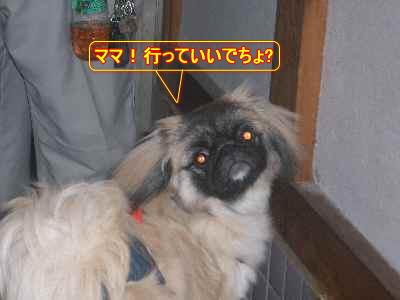 CIMG2046.jpg