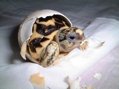 turtle03.jpg