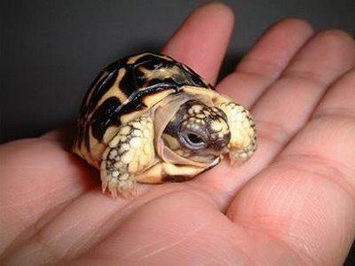 turtle04.jpg