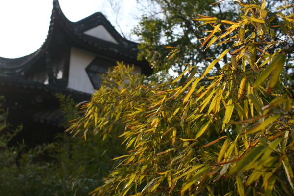 zhenzhou 224