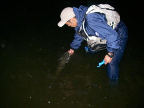 涸沼 シーバス 2007.9.26.4