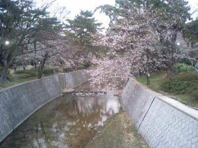 4/2夜6時の桜