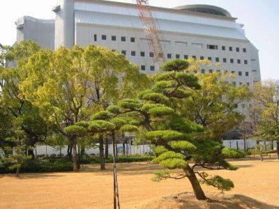 大阪城公園、馬場町側 駐車場がなくなり整備されました。後ろは大阪府警本部