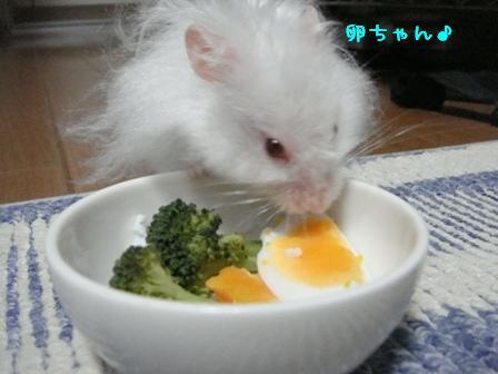 卵ちゃん♪