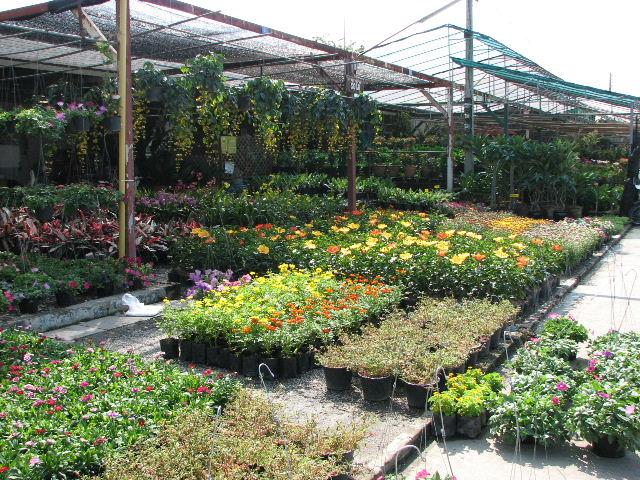 カムティアン市場の苗屋