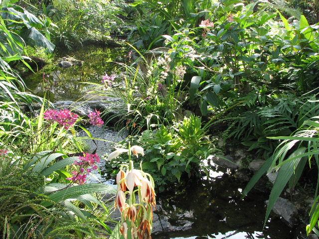 シリキット植物園のラン