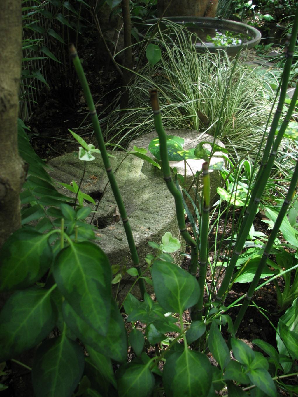 川部さんの庭#3 07_05