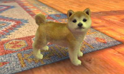 dogcat230817