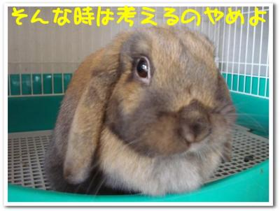 satori2.jpg