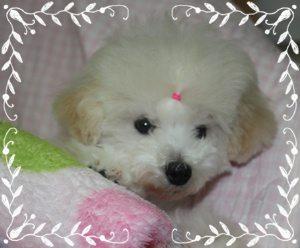 仔犬 1 2011.4.6 014