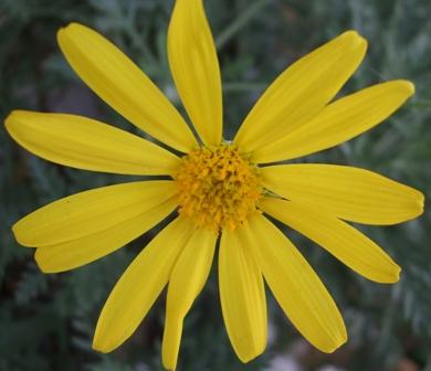 黄色い円形