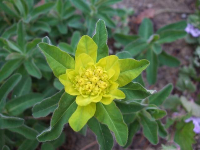 草っぽい黄色