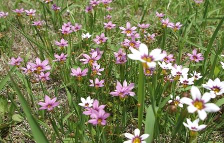 小さな花の群生