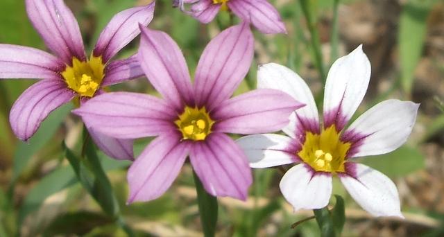 小さい花アップ