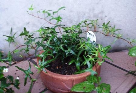 緑の植物1
