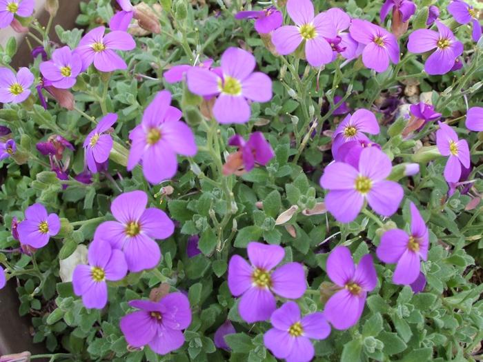 小さな紫色