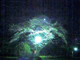 070329_2008~001.jpg