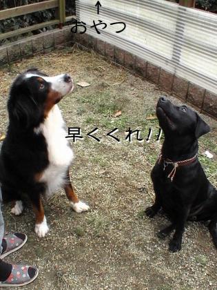 ぷっちとROMIとちょこっとまれすけ009 (1)