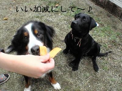 ぷっちとROMIとちょこっとまれすけ009 (2)