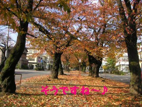 11-11-14.jpg