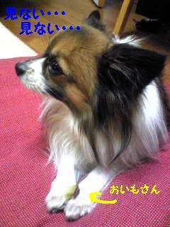 20070226003108.jpg