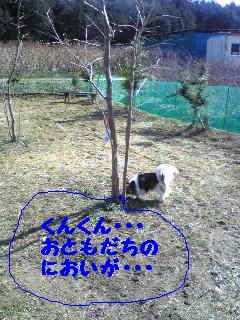 20070301233435.jpg