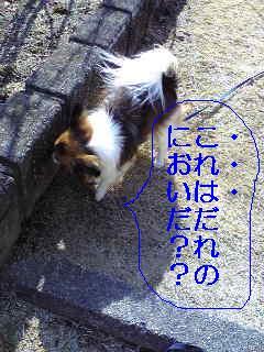 20070310003405.jpg