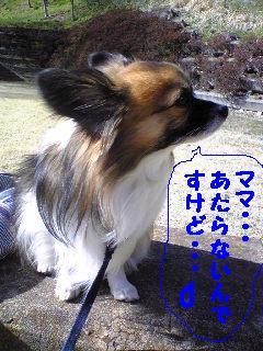 20070318004436.jpg