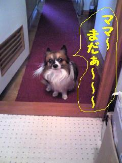 20070321011208.jpg