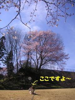 20070330230624.jpg