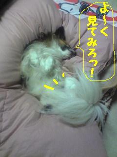 20070403010255.jpg